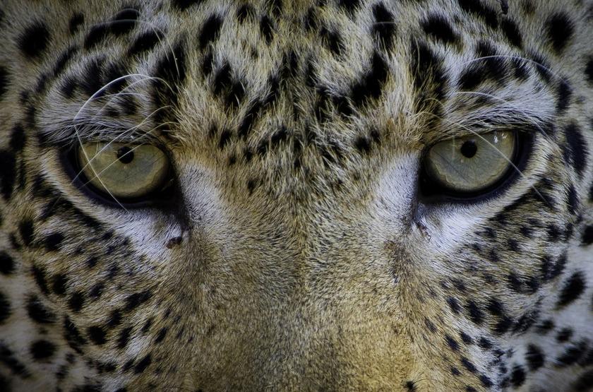 Safari de luxe au Botswana