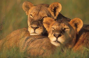 Botswana - Zimbabwe - Mozambique : le fabuleux voyage de noces qui combine safaris et plages, voyage Afrique