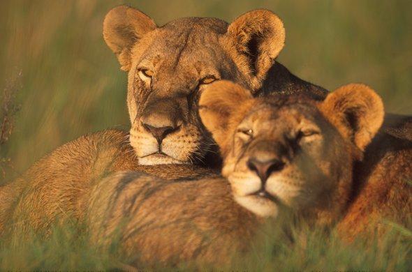 Botswana - Zimbabwe - Mozambique : fabuleux voyage de noces safaris et plages, voyage Afrique
