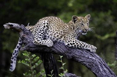 Rivière Chobe et safari dans le parc Hwange au Zimbabwe, voyage Afrique