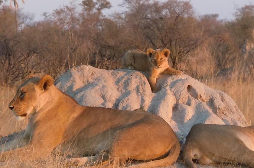 Parc Hwange, Zimbabwe