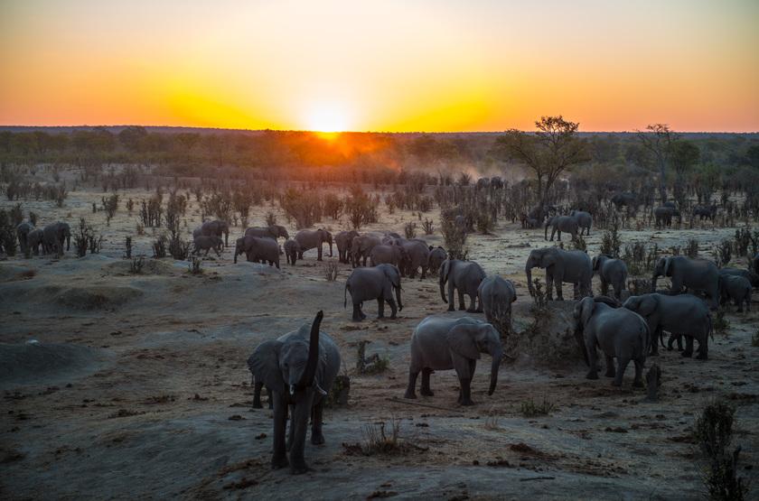 Eléphants, parc Hwange, Zimbabwe