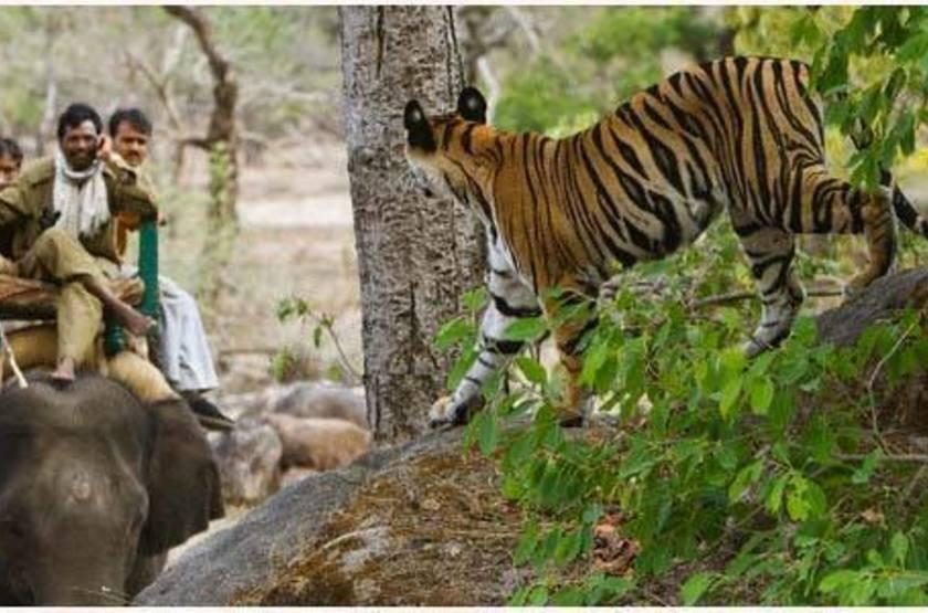 Safari à dos d'éléphant, tigre à Bandavgar, Inde