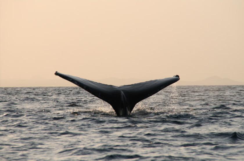 Baleines au Mozambique, Nuarro Beach