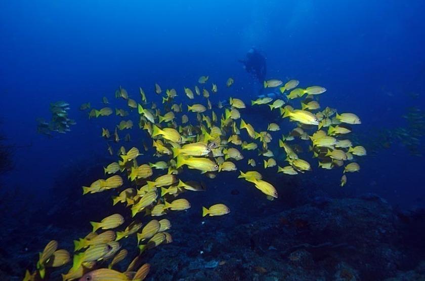 Plongée dans les îles Andaman, Inde