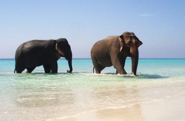 Plongée aux îles Andaman, voyage Asie