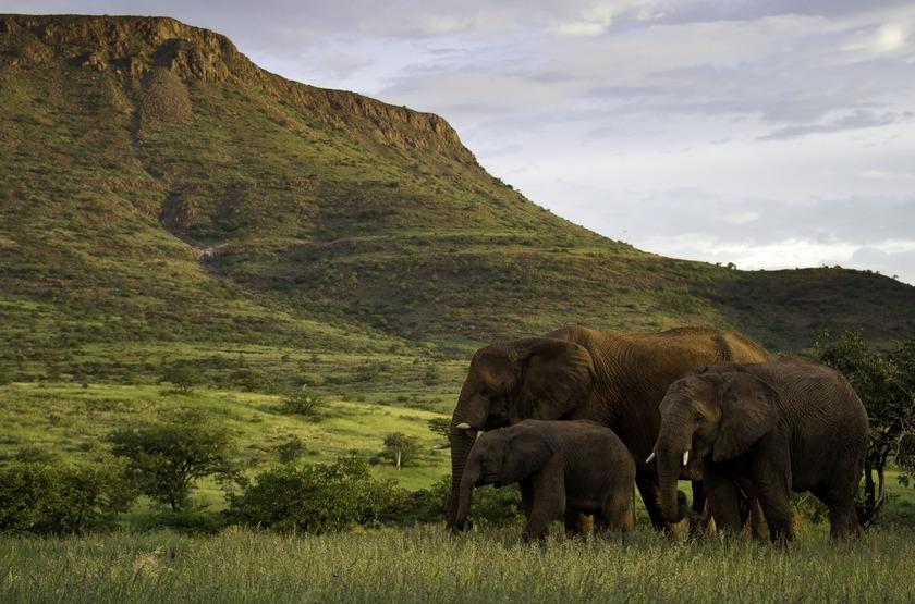 Eléphants du désert en Namibie