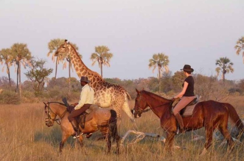 Macatoo Horse Safari, Botswana