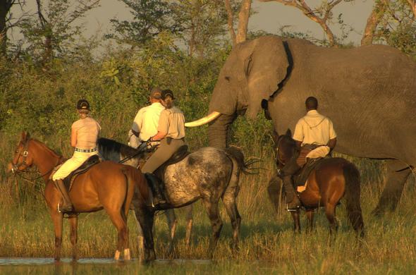 Safari à cheval au Botswana, voyage Afrique