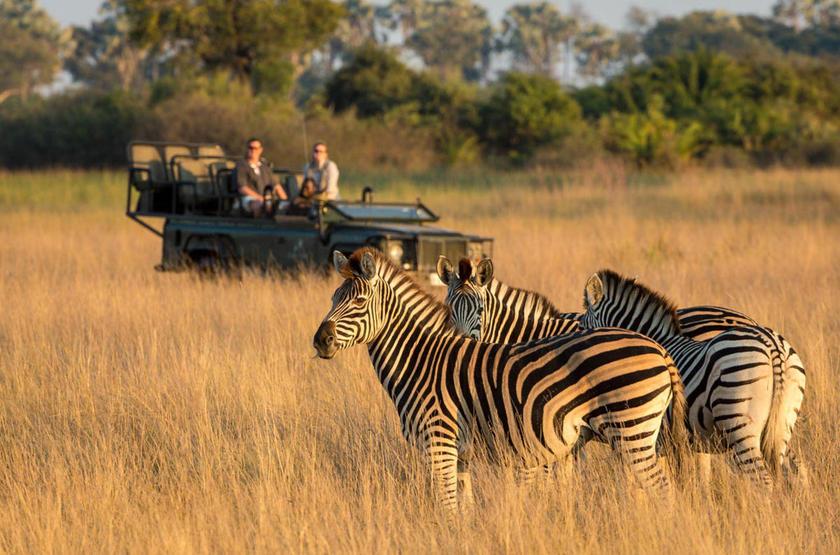 Safari en 4x4, delta de l'Okavango, Botswana