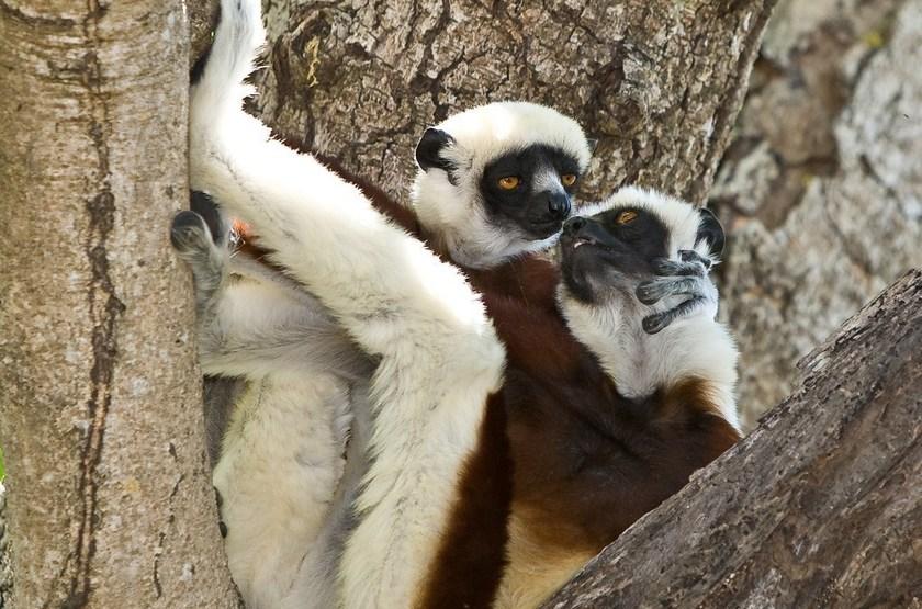 Voyage de noces à Madagascar