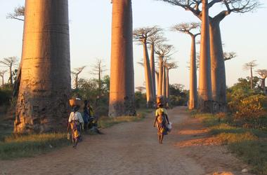 Entre Tsingy et lagons : Madagascar la majestueuse, voyage Océan indien