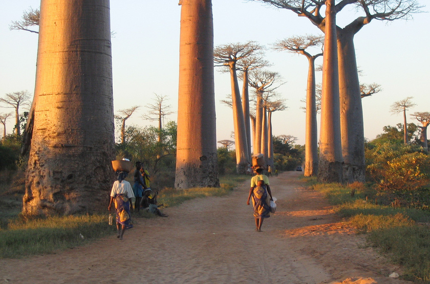 Morondova   all e des baobabs 1 slideshow