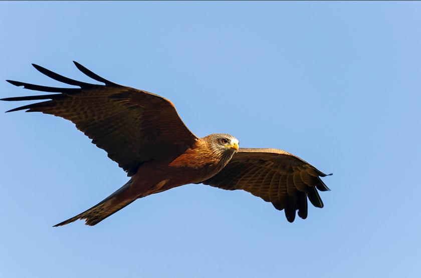 Bemahara aigle grandes tsaingy slideshow