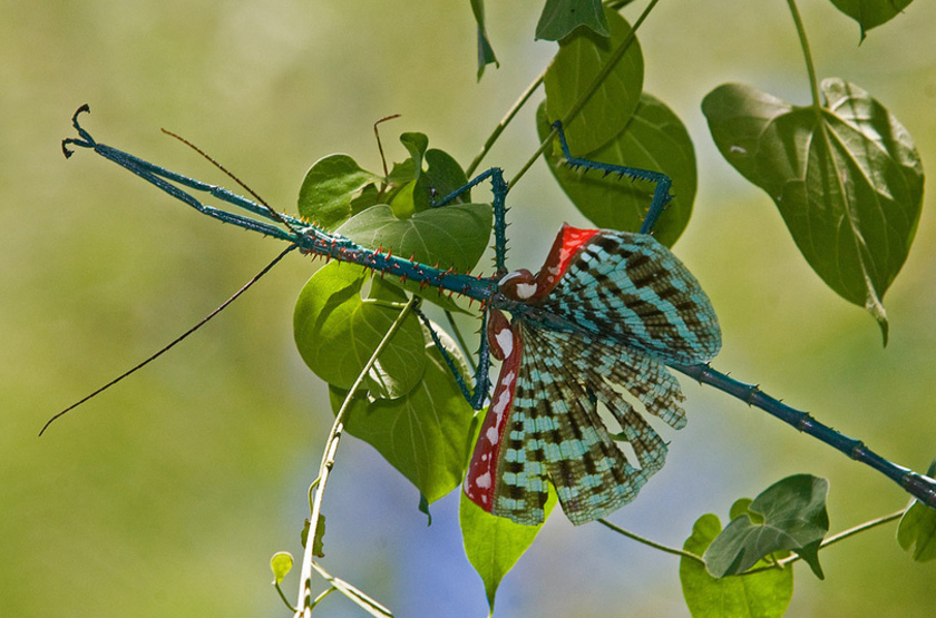 Moronova   papillon slideshow