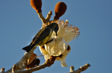 Madagascar en 4x4 privé de Tuléar à Diego Suarez, voyage Océan indien