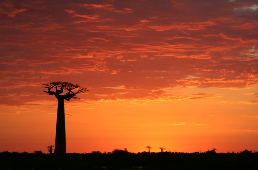 Baobabs sunset slideshow