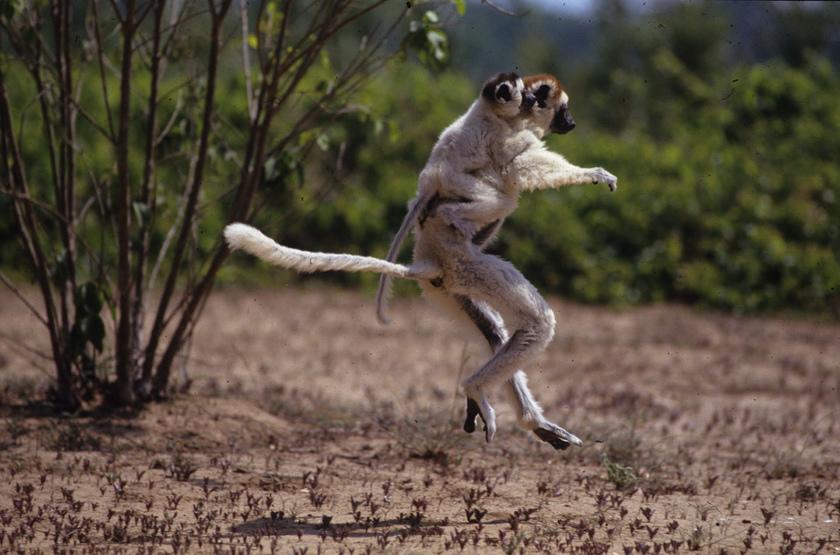 Danse de l muriens slideshow