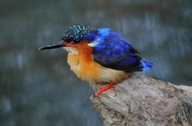 Explorez la réserve de Masoala, un joyau de l'île verte., voyage Océan indien
