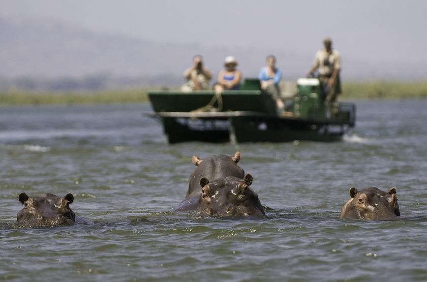 Safari en bateau à Rockomechi Camp