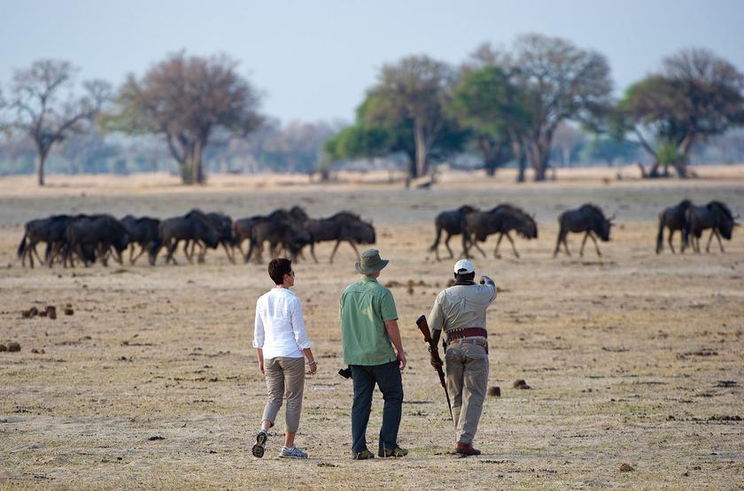 Safari à pied à Ruckomechi Camp, Zimbabwe