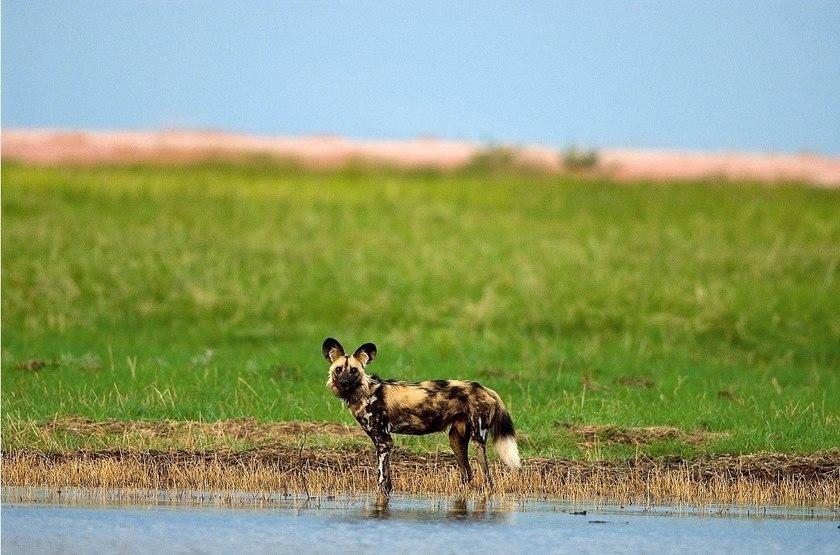 Safari à Matusadona, Zimbabwe