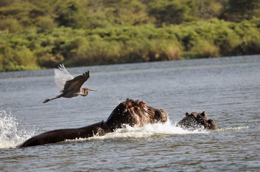 Safari en bateau à Imbabala, Zimbabwe