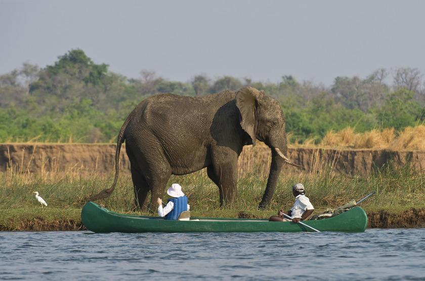 Safari en canoë sur le Zambèze, Zimbabwe