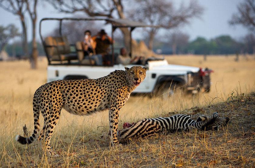 Safari en 4x4 dans le camp Hwange, Zimbabwe