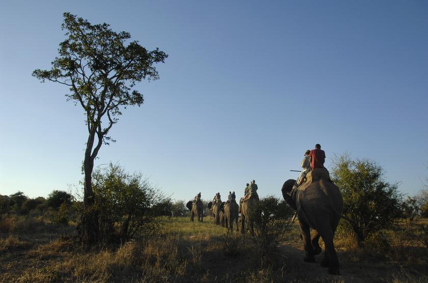 Safari à dos d'éléphant, Zimbabwe