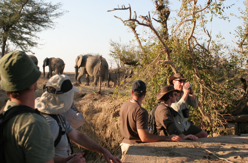 Safari à pied à Camp Hwange, Zimbabwe