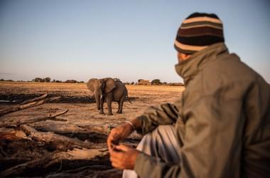 Safari à Camp Hwange, voyage Afrique