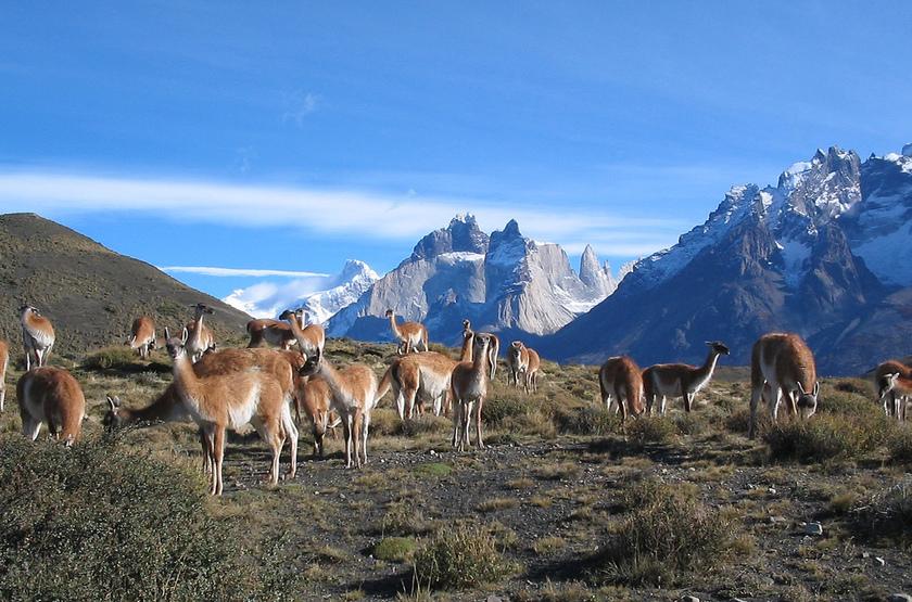 Torres del paine et lamas4  slideshow
