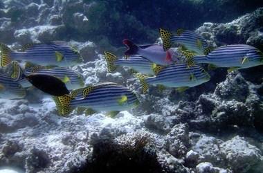 Les Maldives, un immense aquarium naturel au coeur de l'Océan Indien, voyage Océan indien