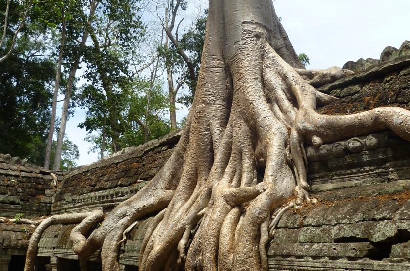 Temples d'Ankor, Cambodge