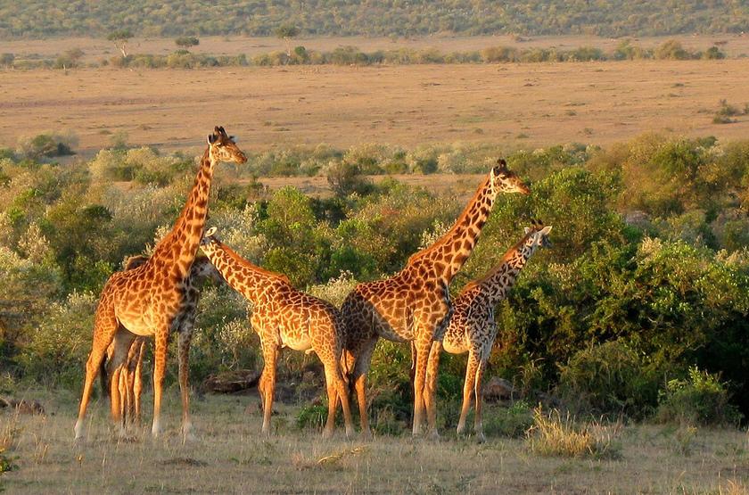 Kenya, grande plaine du Serengeti