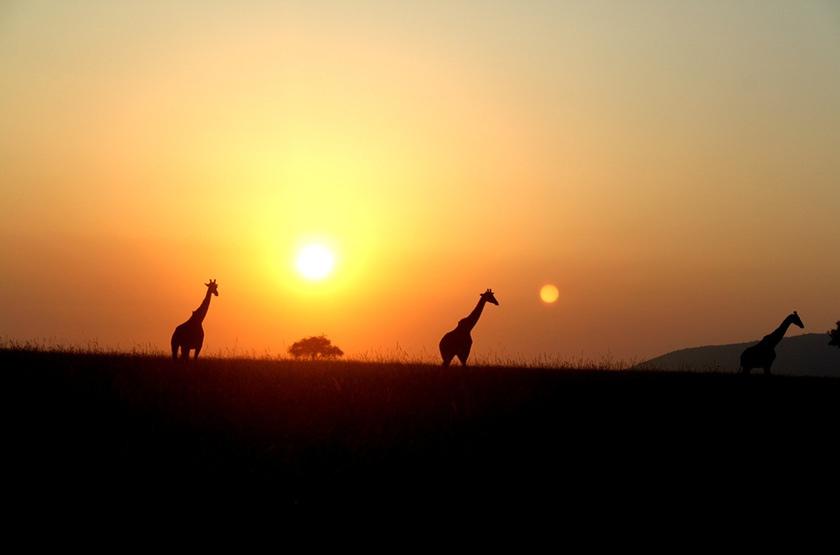 Kenya, Serengeti