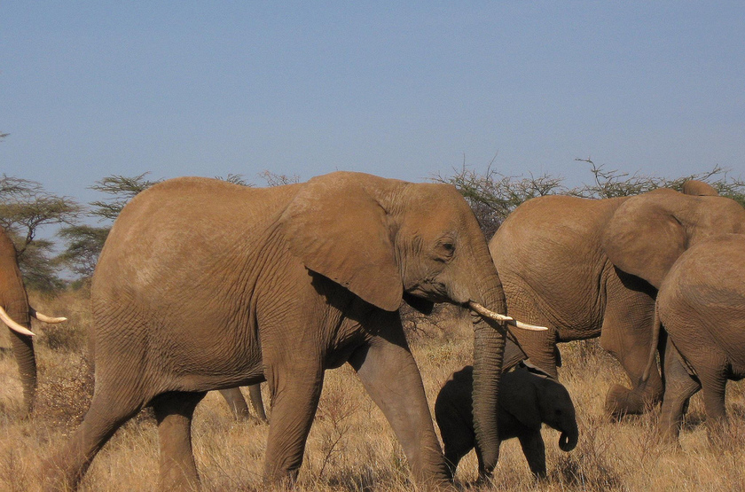 Kenya, Samburu