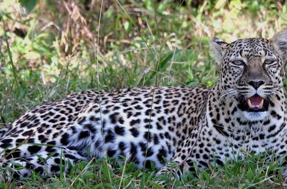 Safari grand luxe au Kenya, voyage Afrique