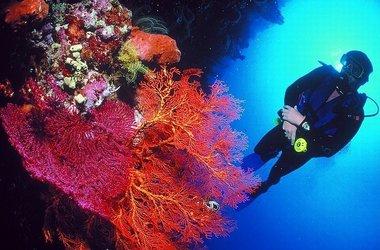 Voyage plongée sous-marine à Bali, voyage Asie