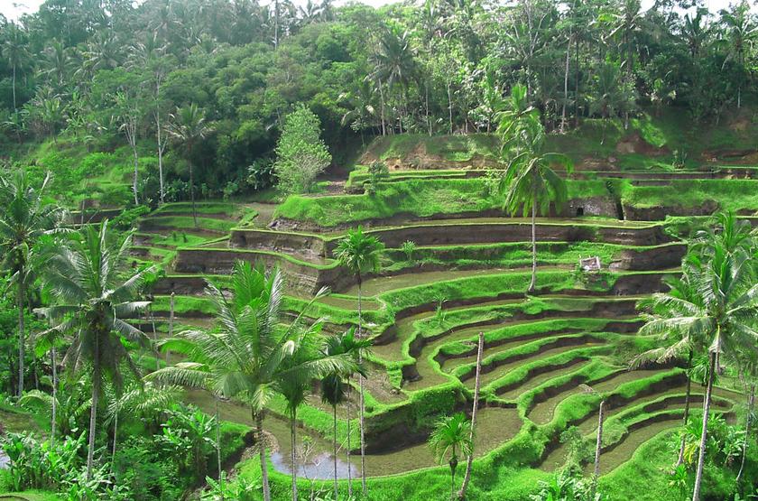 Ubud, Bali, Indonésie