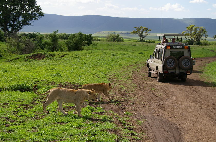Safari en 4x4 en Tanzanie