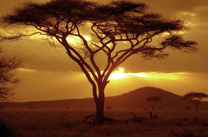 Sunset à Tarangire, Tanzanie