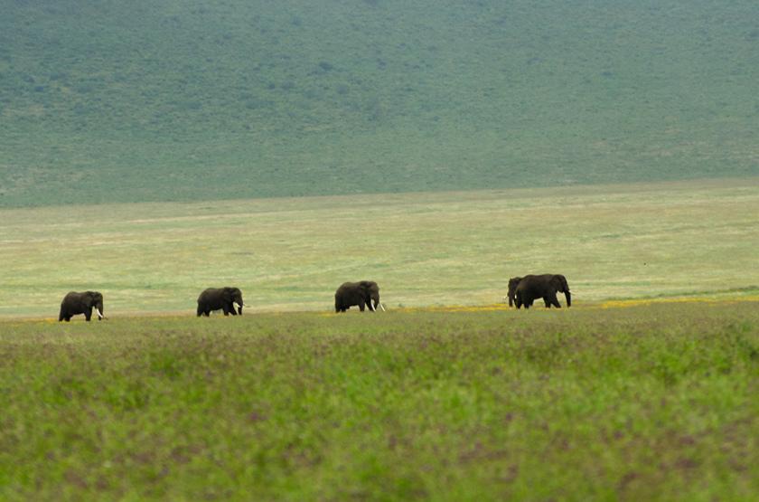Eléphants dans le cratère du Ngorongoro, Tanzanie