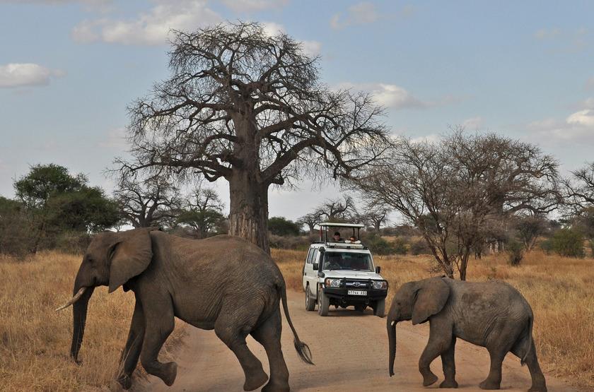 Safari en 4x4 à Tarangire, Tanzanie