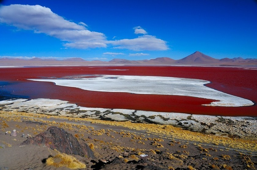 Laguna Colores, Bolivie