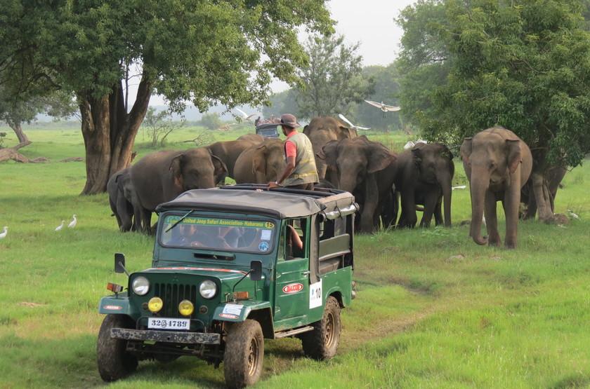 Safari en famille au Sri Lanka