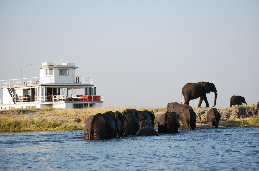 Chobe Princess, safari en bateau, Rivière Chobe, Botswana