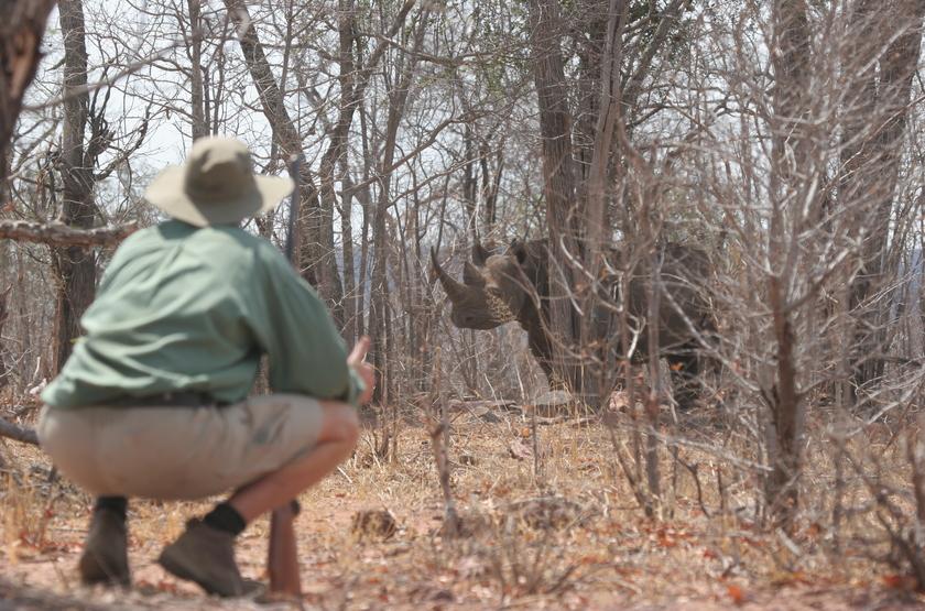 Safari à pied, Kazuma Trails, Botswana