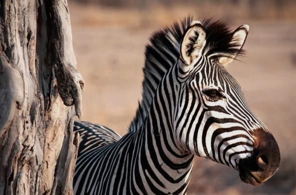Zambie : South Luangwa et Lower Zambezi à prix malin, voyage Afrique
